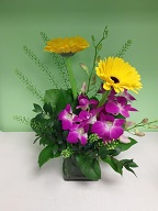 Dendrobium orchids, gerbera, and thlaspia