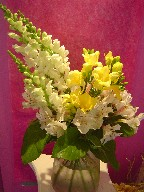 Snapdragon, alstroemeria, and freesia
