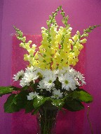 Snapdragon and daisies