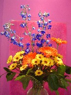 Delphinium, gerbera, and daisies