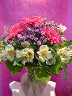 Sweet william, gerbera, and alstroemeria