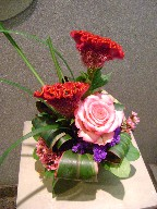 Celosia, statice, rose, waxflowers, cordeline, and monkey grass