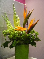 Bird of paradise, snapdragon, statice, and pompoms