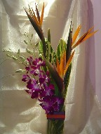 Bird of paradise, dendrobium orchids and green leaves