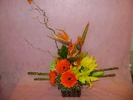 Bird of paradise, gerbera, lillies, cymbidium orchid, hypericum, curly willow, pom poms, and variegated pitt